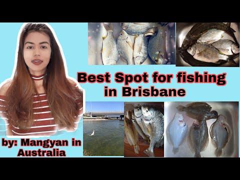FISHING LIKE A PRO   BEST SPOT FOR FISHING IN BRISBANE  