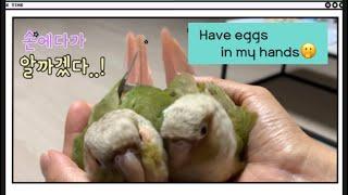 앵무새가 이럴 수 있다고?!!! Parrot can b…