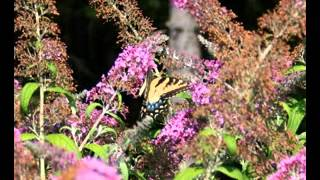 Easy Diy Butterfly Flower Garden Design Decorating Ideas