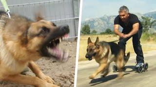 Cesar Millan Calms Down Aggressive German Shepherd With Rollerblading