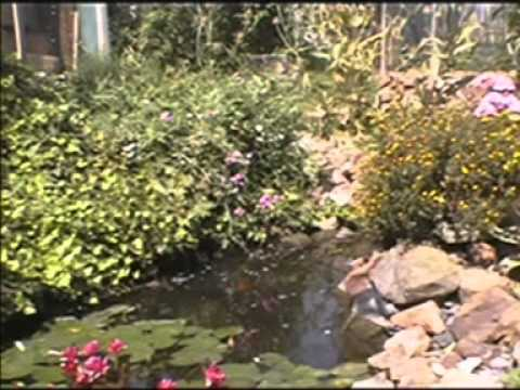 Papageien Wolfgarten