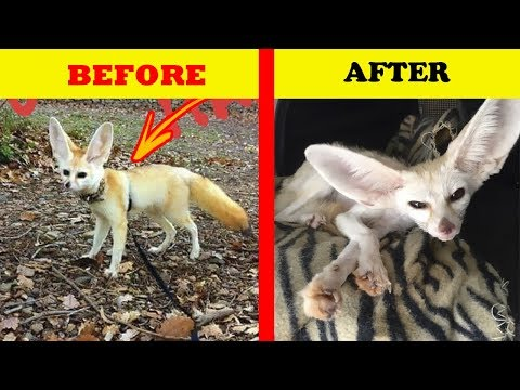 Vegan Woman Forced Her Fennec Fox To Go Vegan, And Here's What Happened