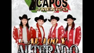 los capos de mexico la canelera