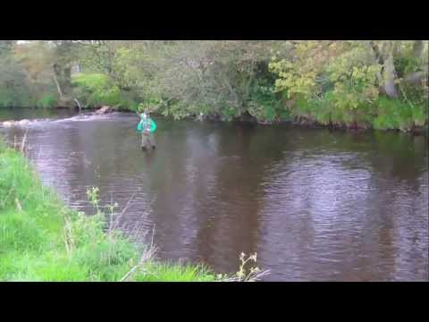 Brown Trout Caught In The Ballinderry River Northern Ireland FlyFishing