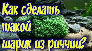 видео Риччия плавающая (Riccia fluitans L.) - Растения в аквариуме - Каталог статей - Каталог статей - Аквариумные рыбки