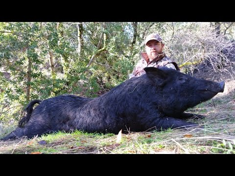 Tuesday's At 6. Two Days Solo Bowhunting California Wild Boar.