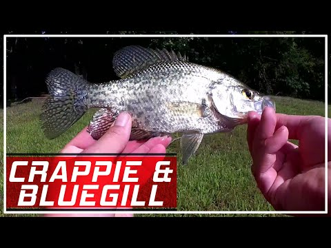 How To Find Fish At A New Lake - Bluegill And Crappie Fishing