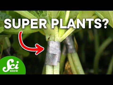 Manipulating plant genes...through grafting!