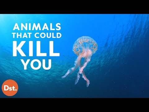 Thumbnail: Animals That Will Kill You While You're on Vacation