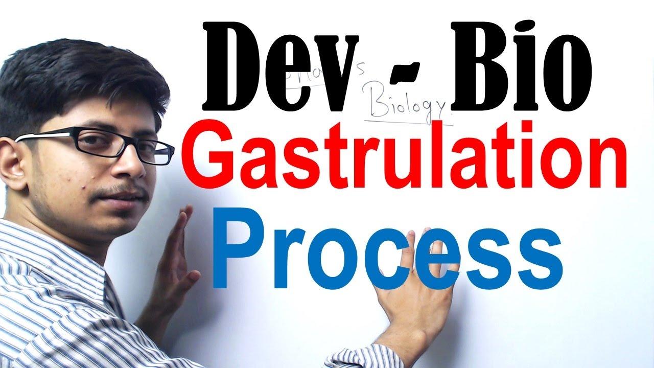 Download Gastrulation