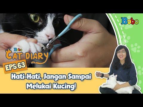 diary-kucing---tips-memotong-kuku-kucing---eps-63