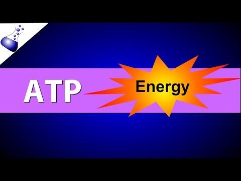 ATP (Adenosine Triphosphate)