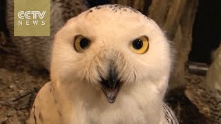 Owl-themed cafe opens in Tokyo