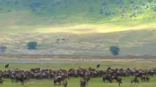 Ngorongoro Conservation Area Tours Video