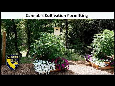 Online Cannabis Permitting Workshop, Nov. 12, 2019