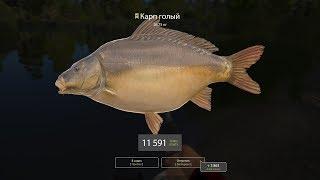 Русская рыбалка 4 #83 - Рыбалка на Медвежьем. Карп и новые бойлы