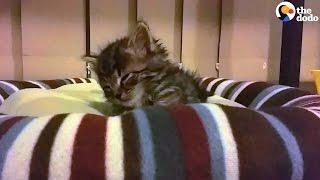 Kitten Keeps Falling Asleep