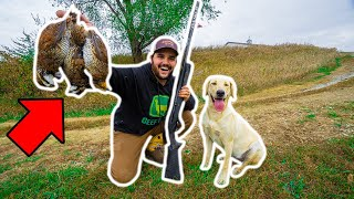 QUAIL HUNTING in My BACKYARD with My PUPPY!!! (Catch Clean Cook)