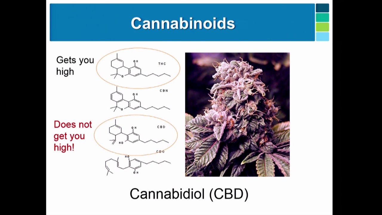 Dr. Sean Mcallister - Cannabinoids as Antitumor Agents: Moving Toward the Clinic
