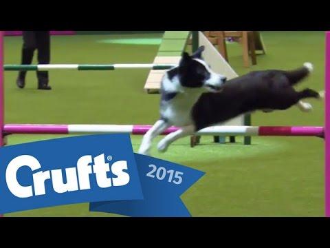 Agility - International Invitation - Large | Crufts 2015