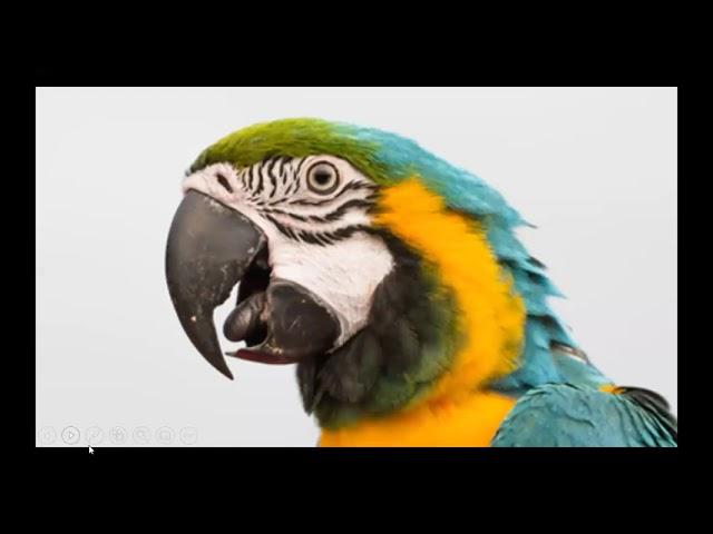 Poisoned Parrot