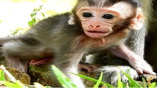 baby monkey angry mom
