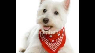Piękna galeria psów (Sokół & Pono - W aucie)