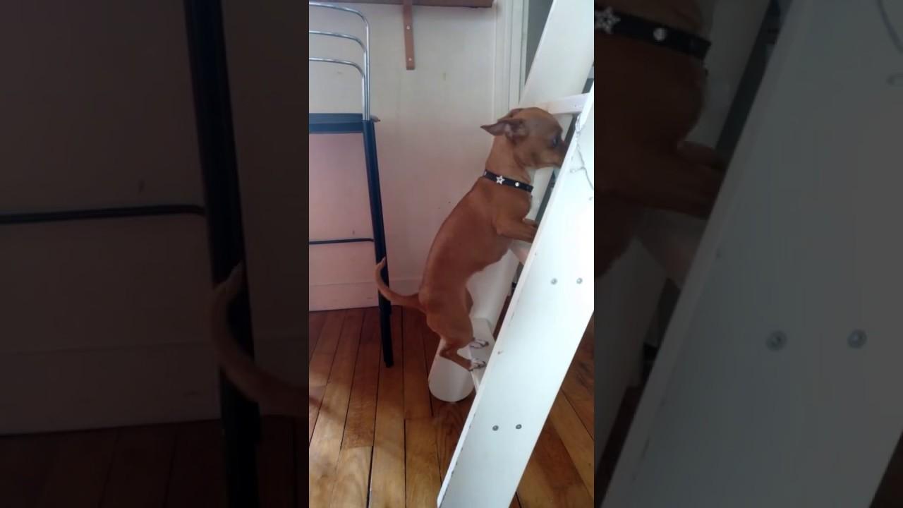 Les chiens n'aiment pas la pluie
