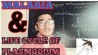 Malaria and life cycle of plasmodium (simplified) for NEET and AIIMS.