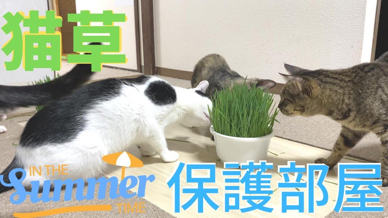 猫草に大勢の猫が・・過去最多!緊急事態!歯止め効かず・・