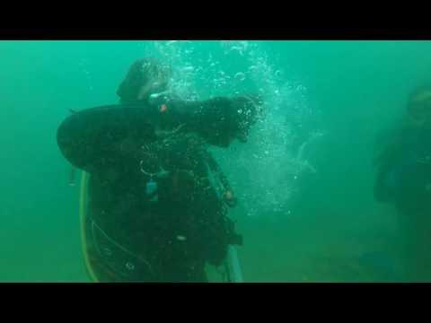 Scuba Diving Sydney:  Camp Cove 14Feb2017