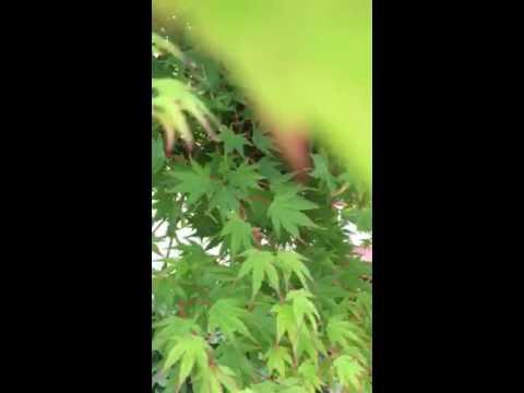 honey-bee-swarm-removal---nassau-county,-long-island,-ny