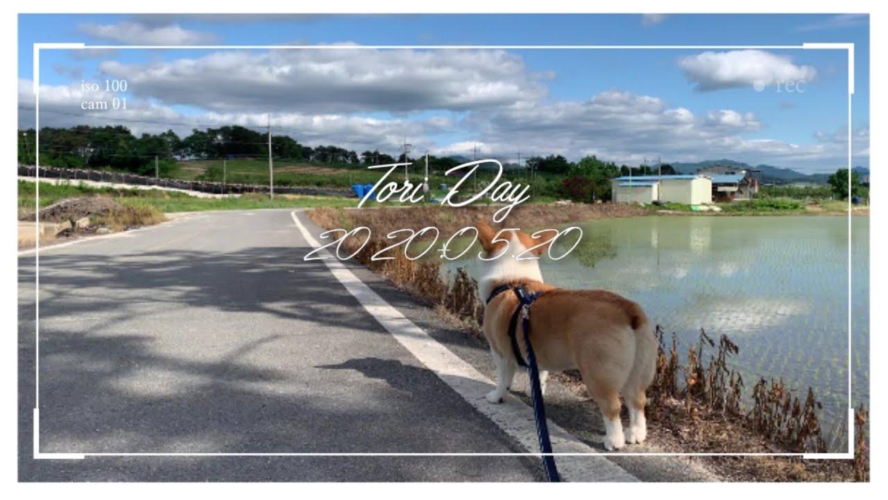 토리의 열한번째 브이로그ㅣ인트로 1일1깡ㅣ이쁜하늘ㅣ강아지 산책