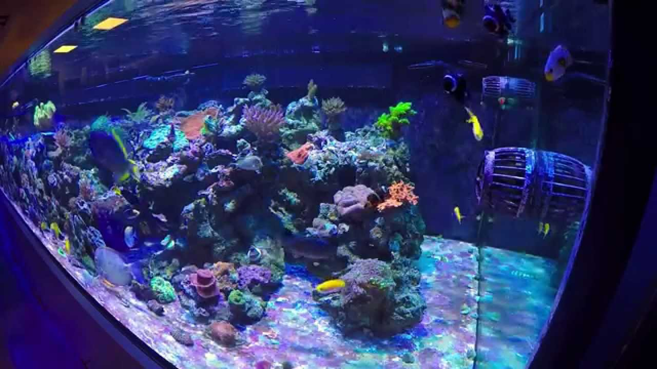 Freshwater aquarium fish orlando - 800g Reef Aquarium Exotic Fish And Reef Orlando