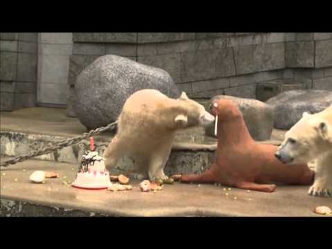 Raw: Bear Gets Cake, Toy Walrus For 1st Birthday
