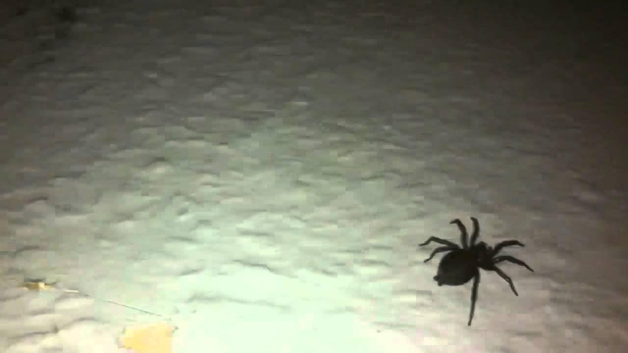Monster Spinne in meinem Zimmer - YouTube