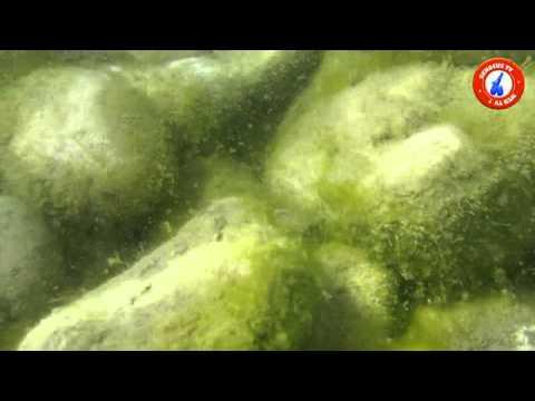 Il Mostro del Lago di Garda ?