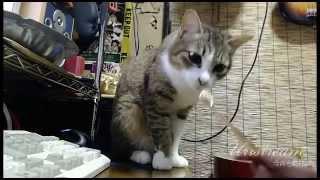 うちの猫のフレーメン反応が超絶にかわいい