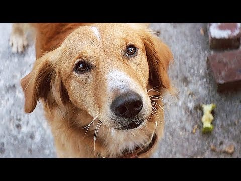 Download Youtube: Dog Owners Live LONGER?