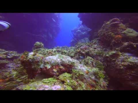 Grand Cayman Dive Trip
