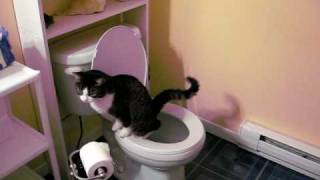 My cat is potty trained!