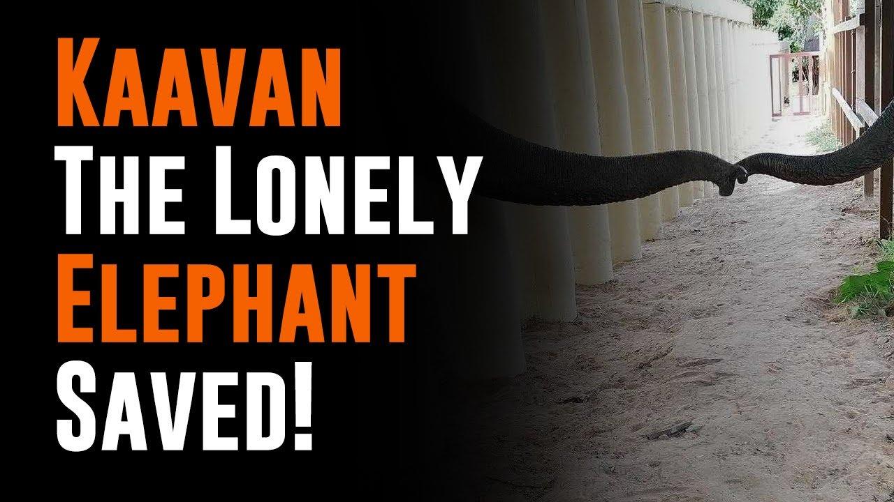 Kaavan Is Saved By Cher