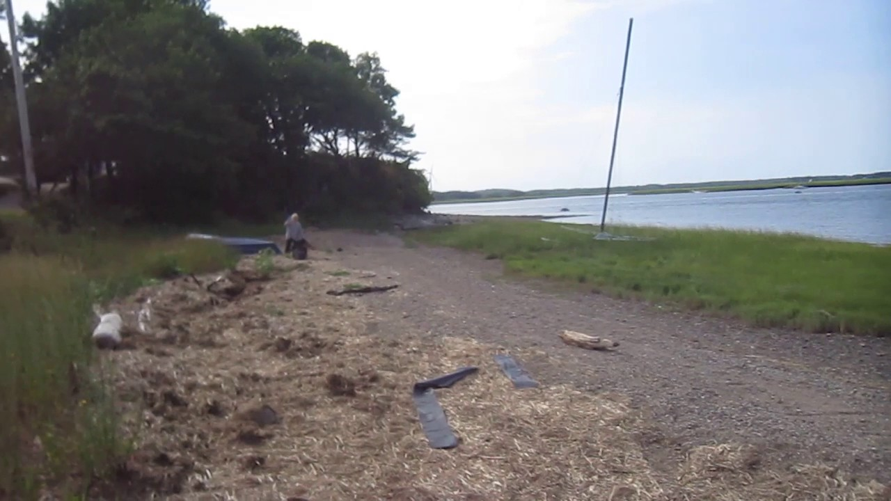 Collecting Salt Marsh Hay At The Beach To Use For Organic Mulching