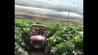 Gafni Farms, Israel - Israel's Leading Farm in the Area of Waxflower and Phlox
