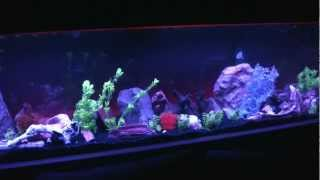 Led Lighting For My 180 Gallon Freshwater Aquarium