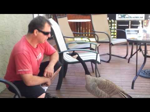Guy Talks To A Canada Goose & It's Awesome