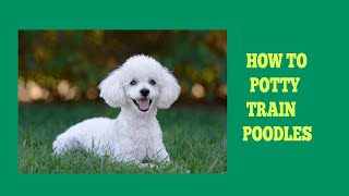 How To Easily House Train Poodles