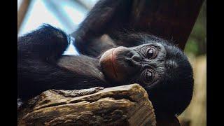 Haben Tiere Bewusstsein, Emotionen & ein Gerechtigkeitsempfinden? | Primatologe Dr. Frans De Waal