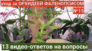 Фаленопсис в домашних условиях, корни орхидей цветоносы и листья - 13 вопросов и ответов