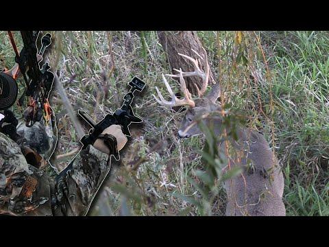 Big Buck At 5 YARDS! - Bowhunt Or Die Season 10 Episode 39